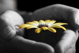 hands-w-flower